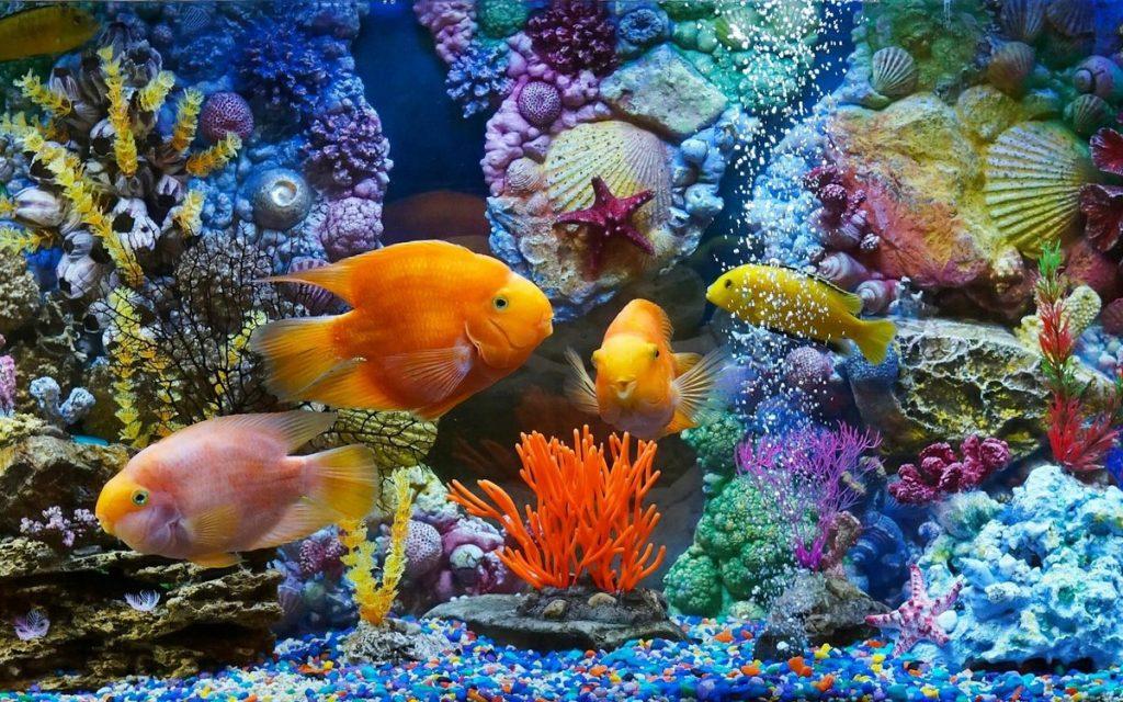Кутхуми - Мысли, как рыбы в аквариуме