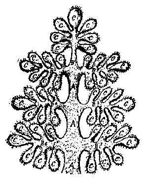 Рисунок 4.3. Иллюстрация из «Тайной Доктрины»